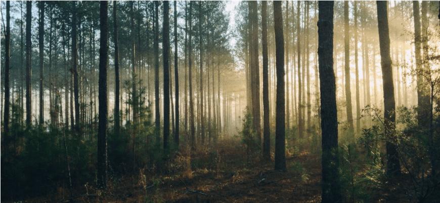 З'явився сайт, на якому можна послухати звуки лісів з різних країн