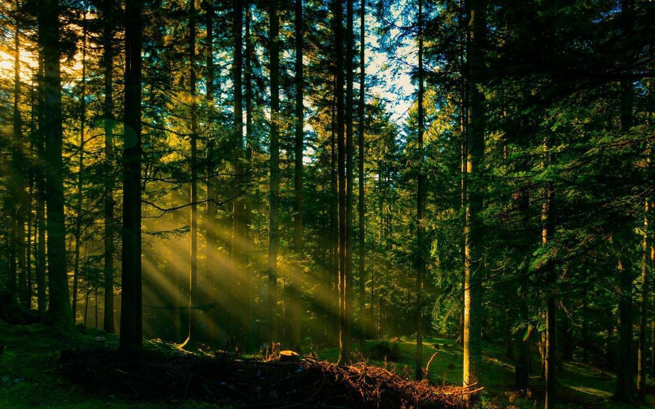 Рятувальники розшукують літнього прикарпатця, який чотири дні тому пішов у ліс і не повернувся