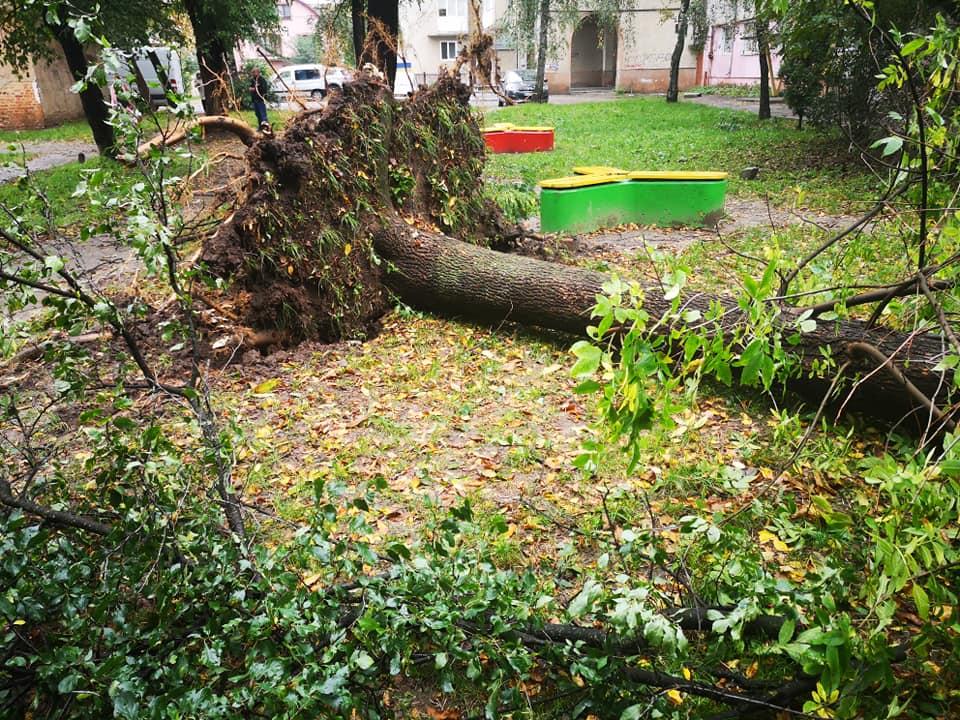Понад пів сотні дерев на прибудинкових територіях повалив буревій – Теплий дім (ФОТО)