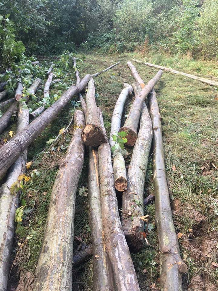 44-річного прикарпатця впіймали за незаконною рубкою лісу (ФОТО)