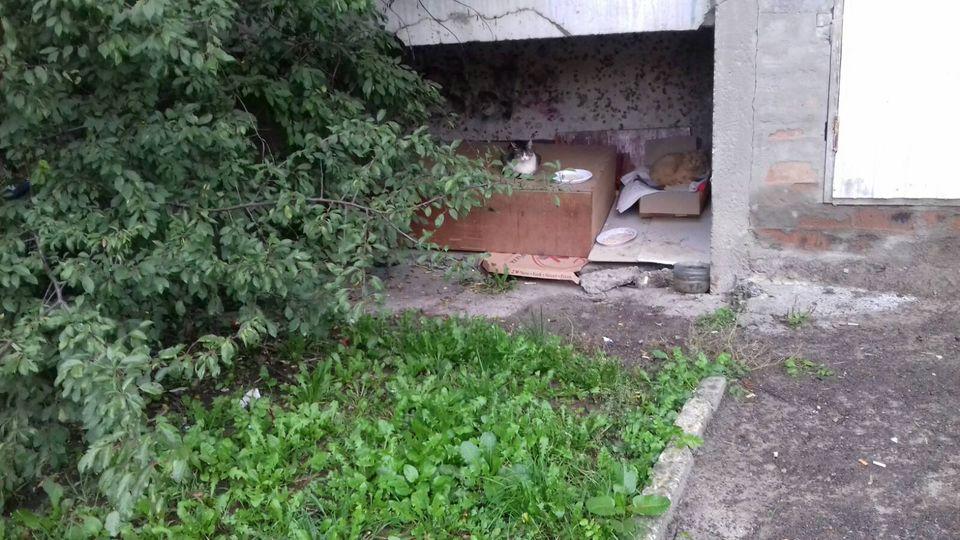 Чуєш ти, убога?: у Франківську жителі будинку вилаяли двірницю, яка прибрала за котами (ФОТО)