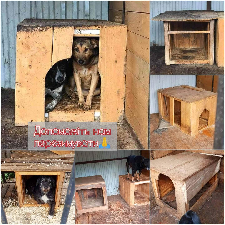"""Франківський притулок """"Дім Сірка"""" потребує фінансової допомоги, щоб закупити утеплені будки для собак"""
