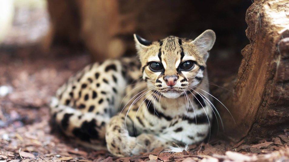 Всесвітній день захисту тварин. 10 най-наймиліших тварин у світі (ФОТО)