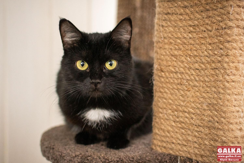 Не всі герої носять плащі. Як японець Сакае Като вже 10 років рятує котів у зараженій радіацією Фукусімі — фоторепортаж