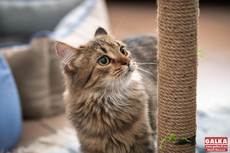 Вчені розповіли, чому муркочуть котики