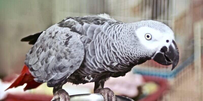 У британському зоопарку папуг сховали від відвідувачів. Через матюки