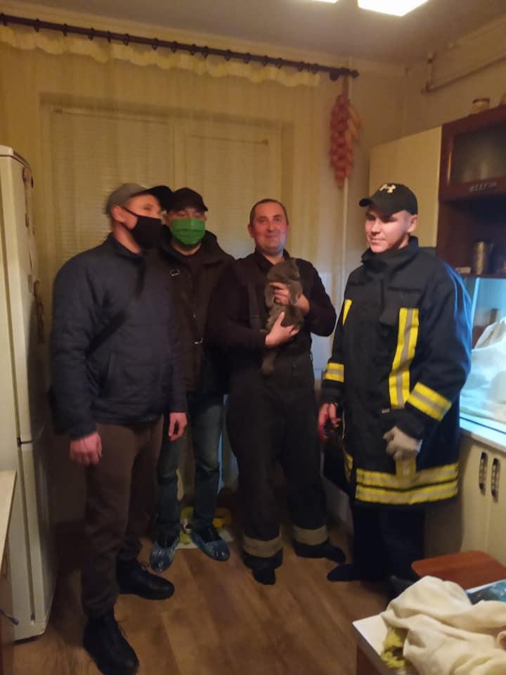У Франківську врятували кошеня, яке впало у вентиляційну шахту багатоповерхівки (ФОТО)