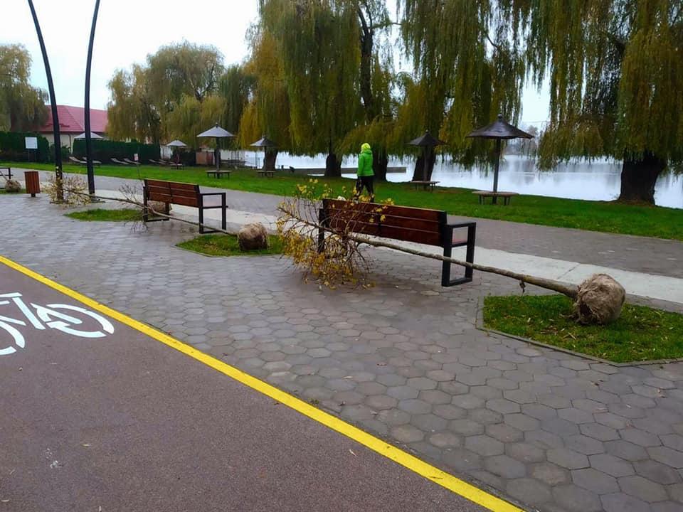 Близько 100 дерев висадять навколо міського озера у Франківську (ФОТО)