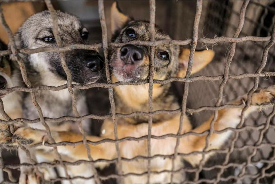 """Франківський притулок """"Дім Сірка"""" потребує фінансової допомоги, щоб закупити корм для тварин"""