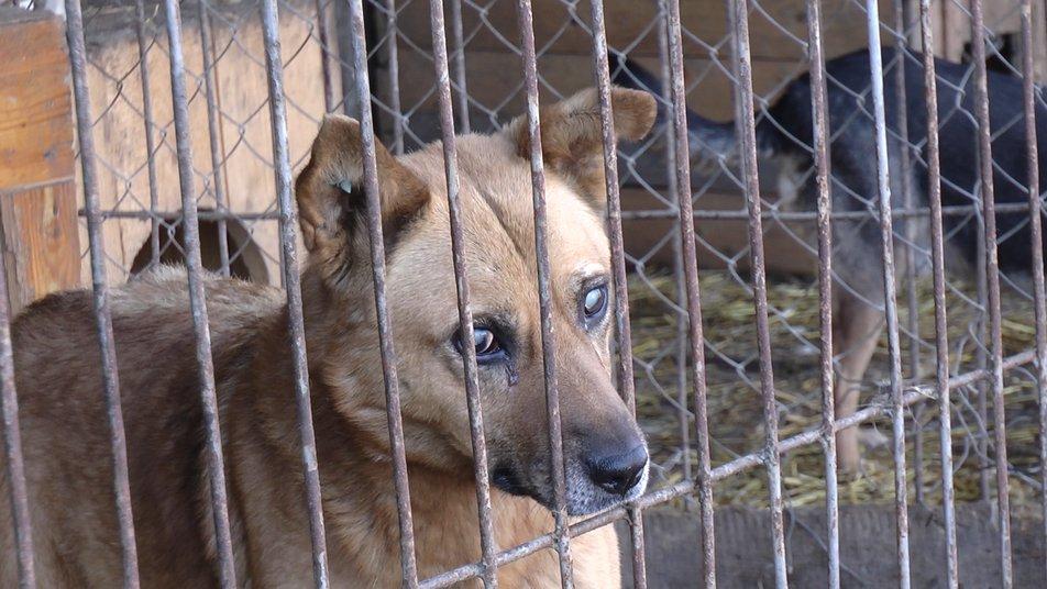 """Калуський """"Дім Сірка"""" переповнений: частину собак випустять на вулицю (ФОТО, ВІДЕО)"""