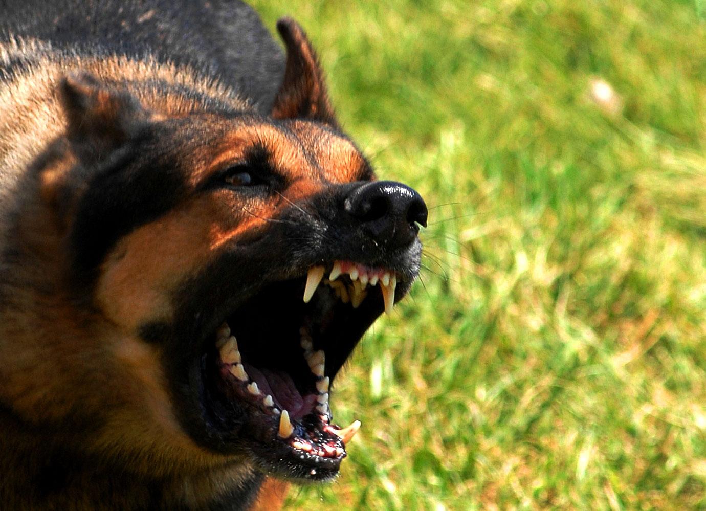 Через сказ собаки село на Богородчанщині потрапило в карантин