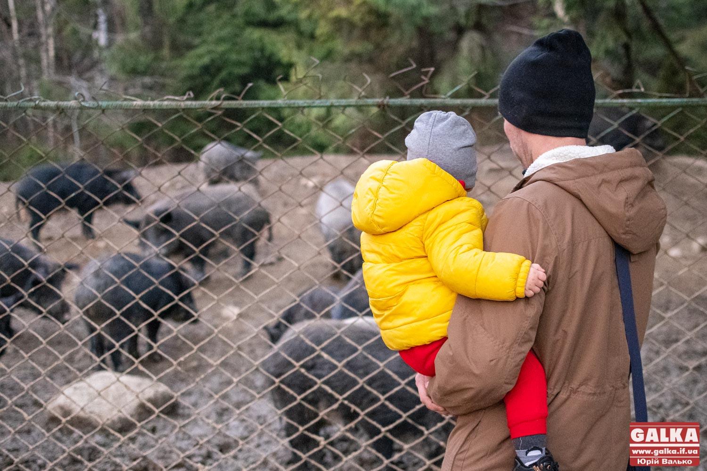 Врятовані від людей. Як живуть тварини у Карпатському національному природному парку (ФОТО)
