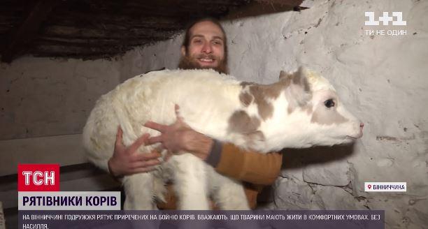 На Вінничині подружжя скуповує у селян корів, щоб їх не відвозили на бійню (ВІДЕО)