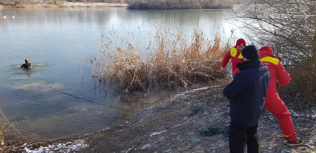 На Прикарпатті рятувальники визволяли лебедів з крижаної пастки (ФОТО)