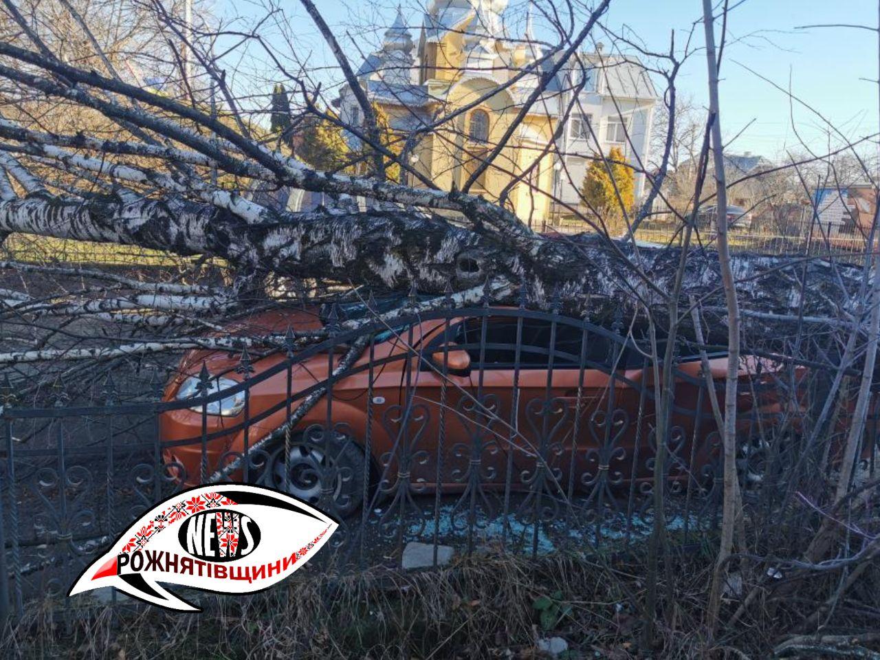 На Богородчанщині дерево впало на магазин, а у Перегінську – на авто (ФОТО)