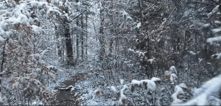 У Галицькому лісі ведмедиця вже залягла у зимову сплячку (ВІДЕО)