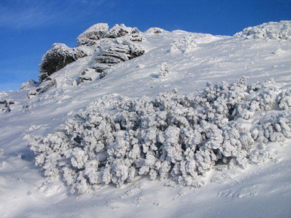 Сніжно і морозно: у мережі опублікували світлини зимових Карпат (ФОТО)