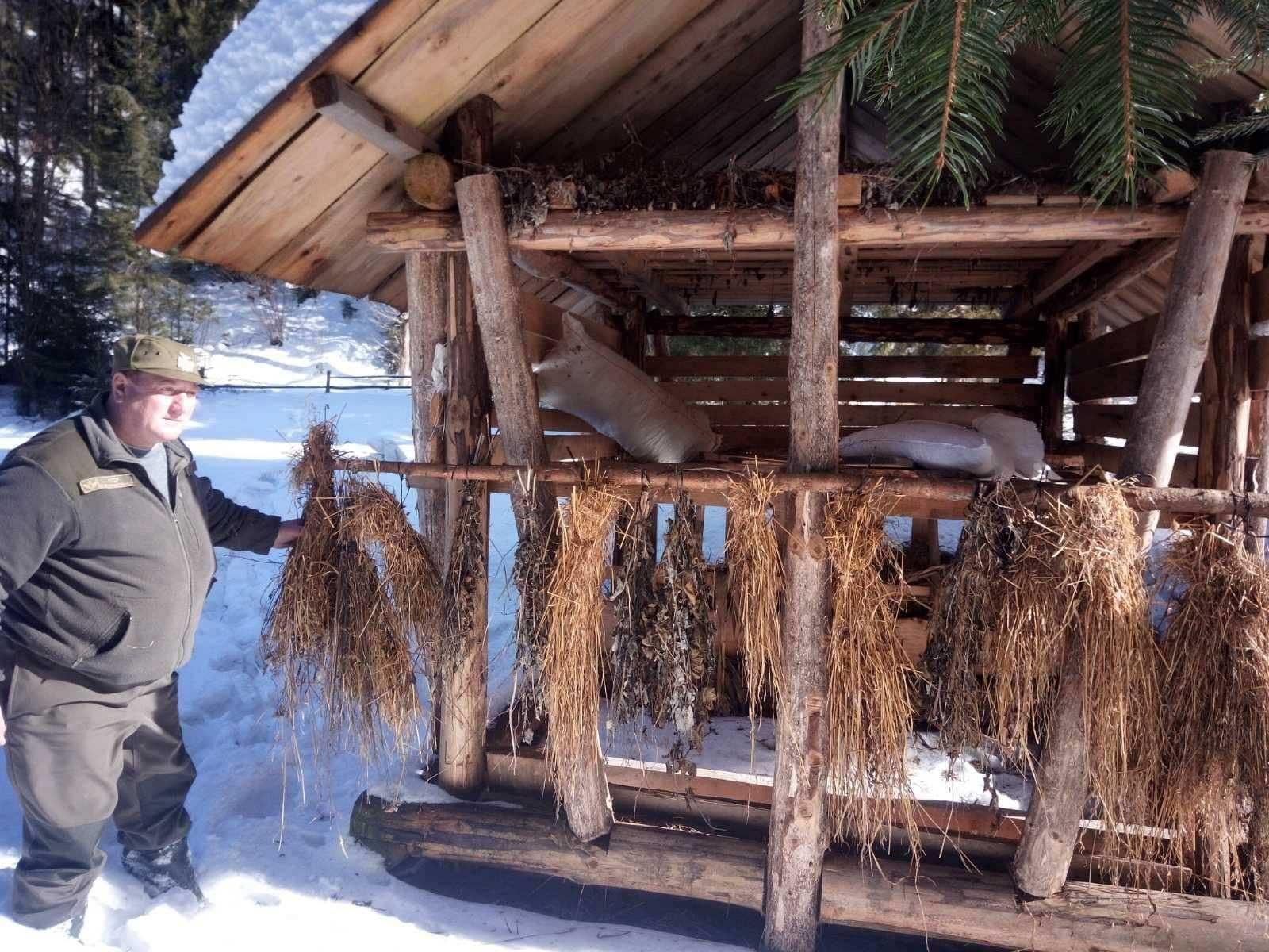 У лісах Прикарпаття організували підгодівлю диких тварин (ФОТО)