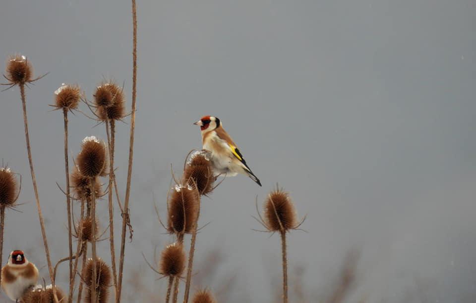 У Дністровському парку – великий зимовий облік птахів. Прикарпатців кличуть долучитися (ФОТО)