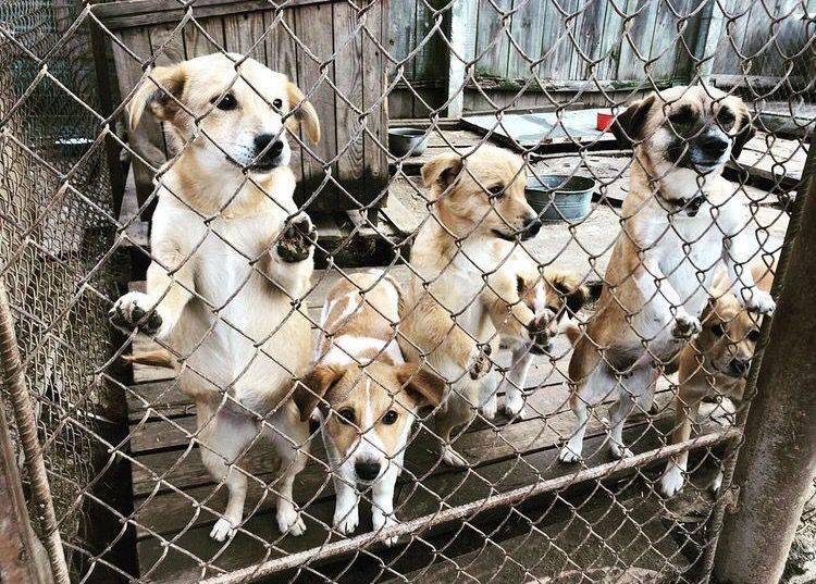 Лінія магазинів EVA допомогла семи притулкам для тварин за рахунок відмови від новорічних подарунків партнерам