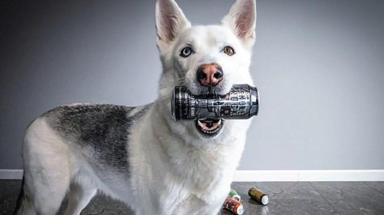 У Канаді чоловік навчив собаку приносити пиво з холодильника