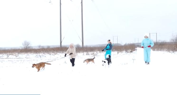 Фітнес із хвостатими: франківців кличуть погуляти зі собаками з притулку (ВІДЕО)