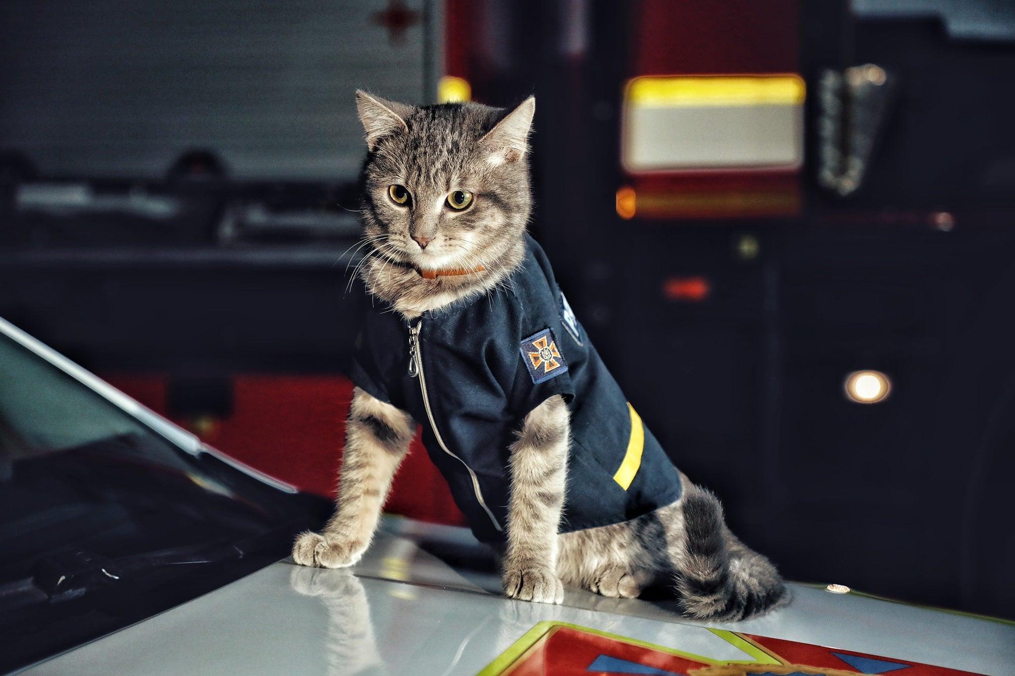 """Кіт, який """"служить"""" в ДСНС України, отримав звання майора (ФОТО)"""
