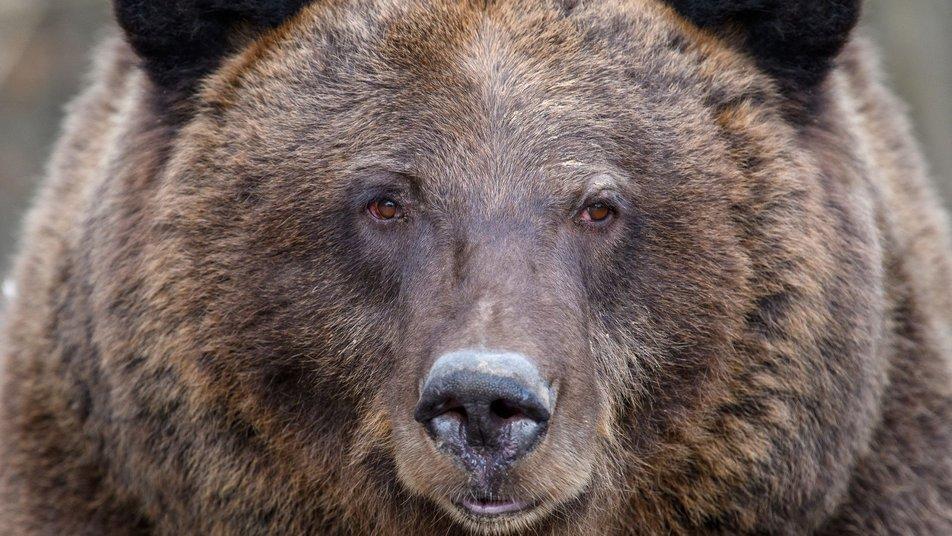У Галицькому нацпарку прокинулися ведмеді (ФОТО)