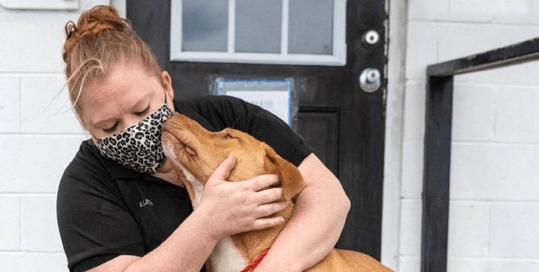 У США бродячий пес п'ять разів намагався вкрасти плюшевого єдинорога з магазину