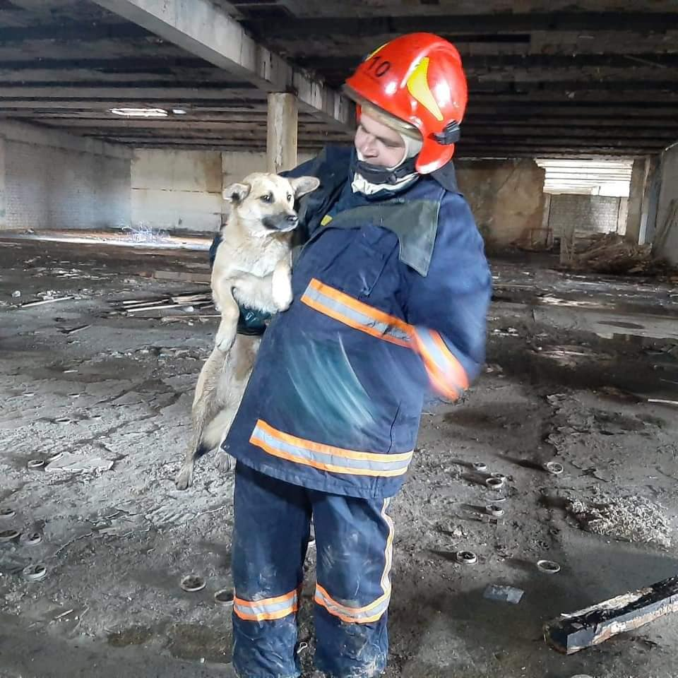 У Долині діти допомогли бійцям ДСНС врятувати собаку з пастки (ФОТО)