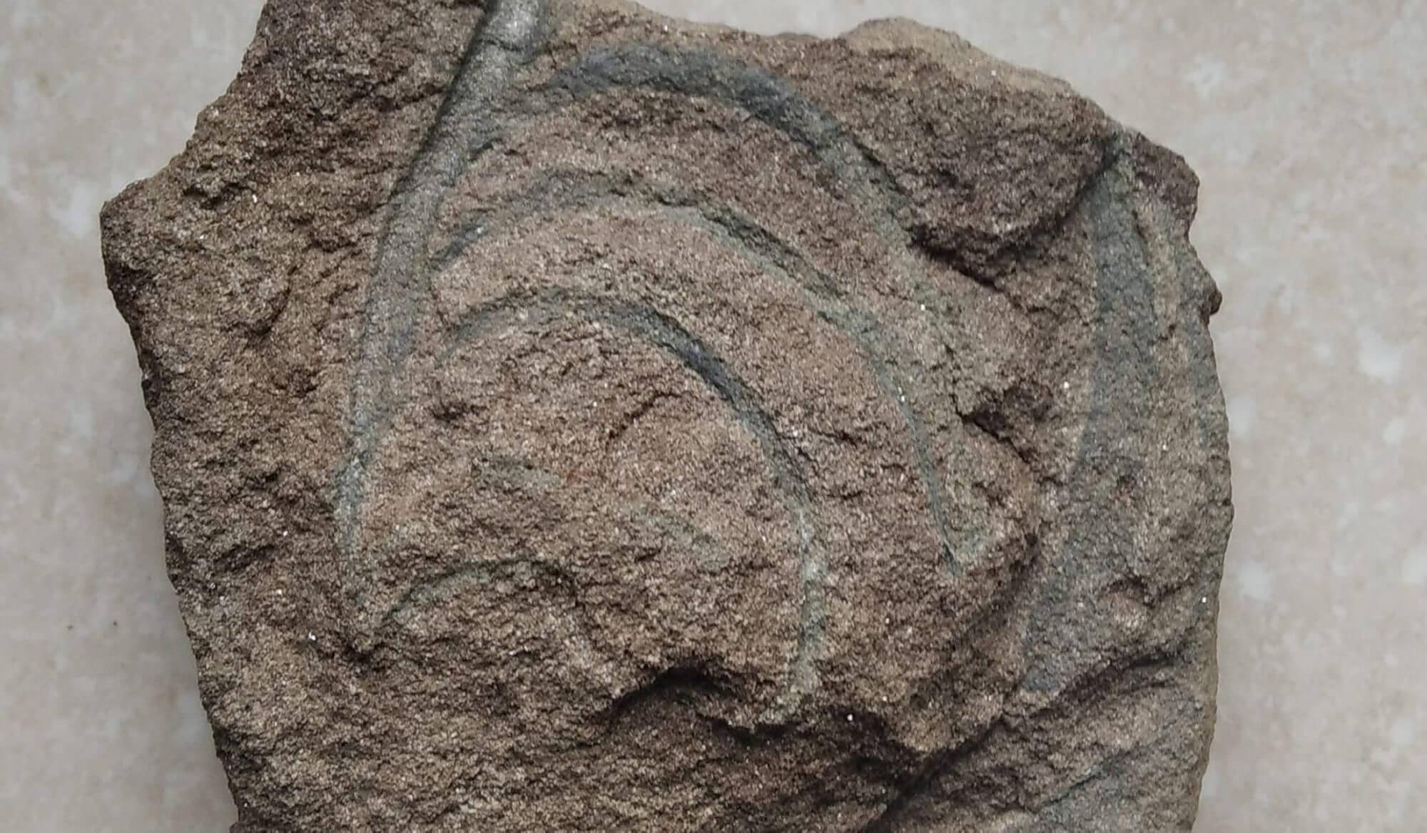 У горах Прикарпаття знайшли камінь з відбитком флори ймовірно давнього океану (ФОТО)