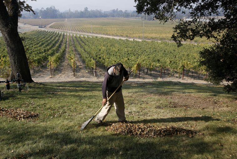 У США на роботу шукають людину, якій платитимуть $10 000 на місяць за любов до вина