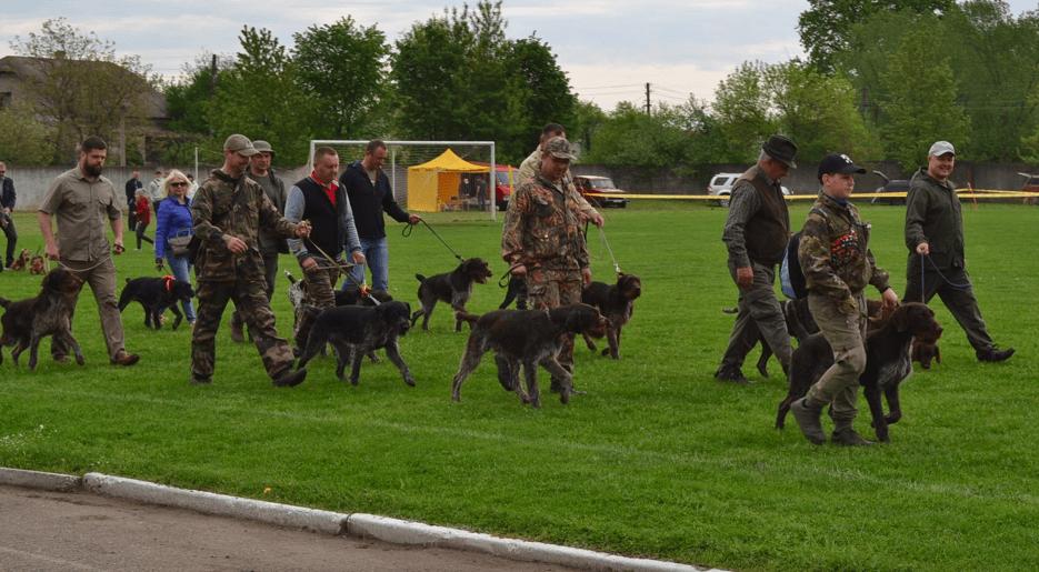 У Галичі влаштували обласну виставку собак мисливських порід (ФОТО)