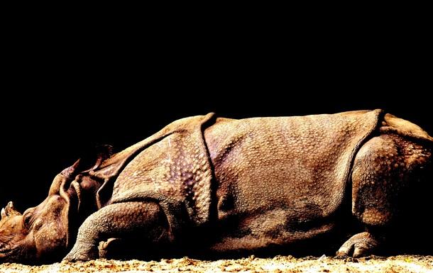 У Китаї відкрили новий вид гігантського носорога