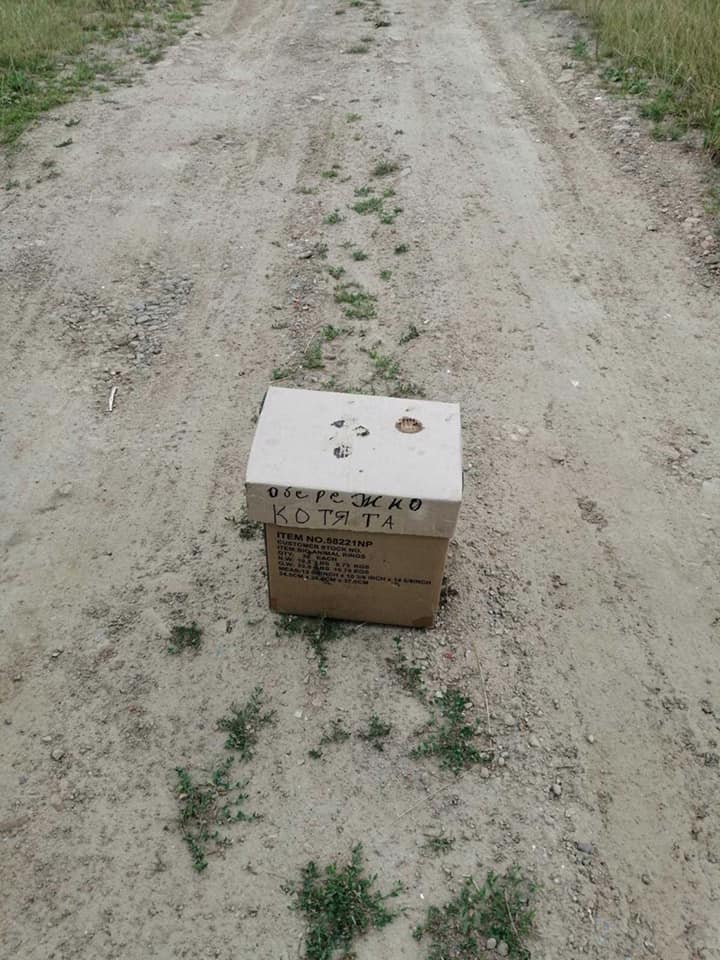 """""""Обережно котята"""" -так підписали коробку з тваринами і залишили на дорозі під Франківськом (ФОТОФАКТ)"""