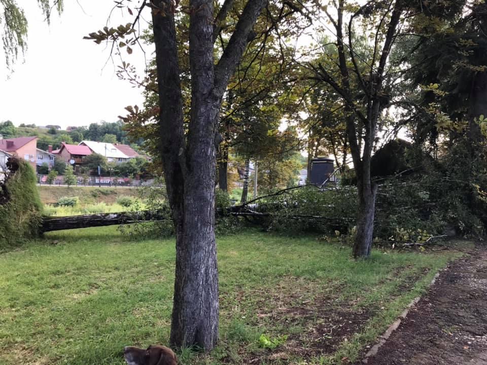 Повалені дерева та перекриті дороги: чотири райони області постраждали від нічної негоди (ФОТО)