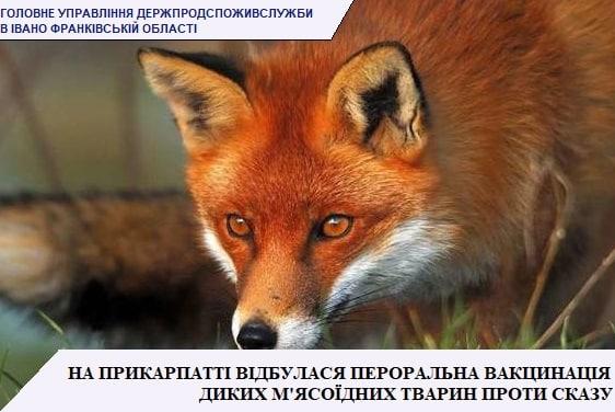 На Прикарпатті з літаків розкинули понад 300 тисяч доз вакцини від сказу для диких тварин