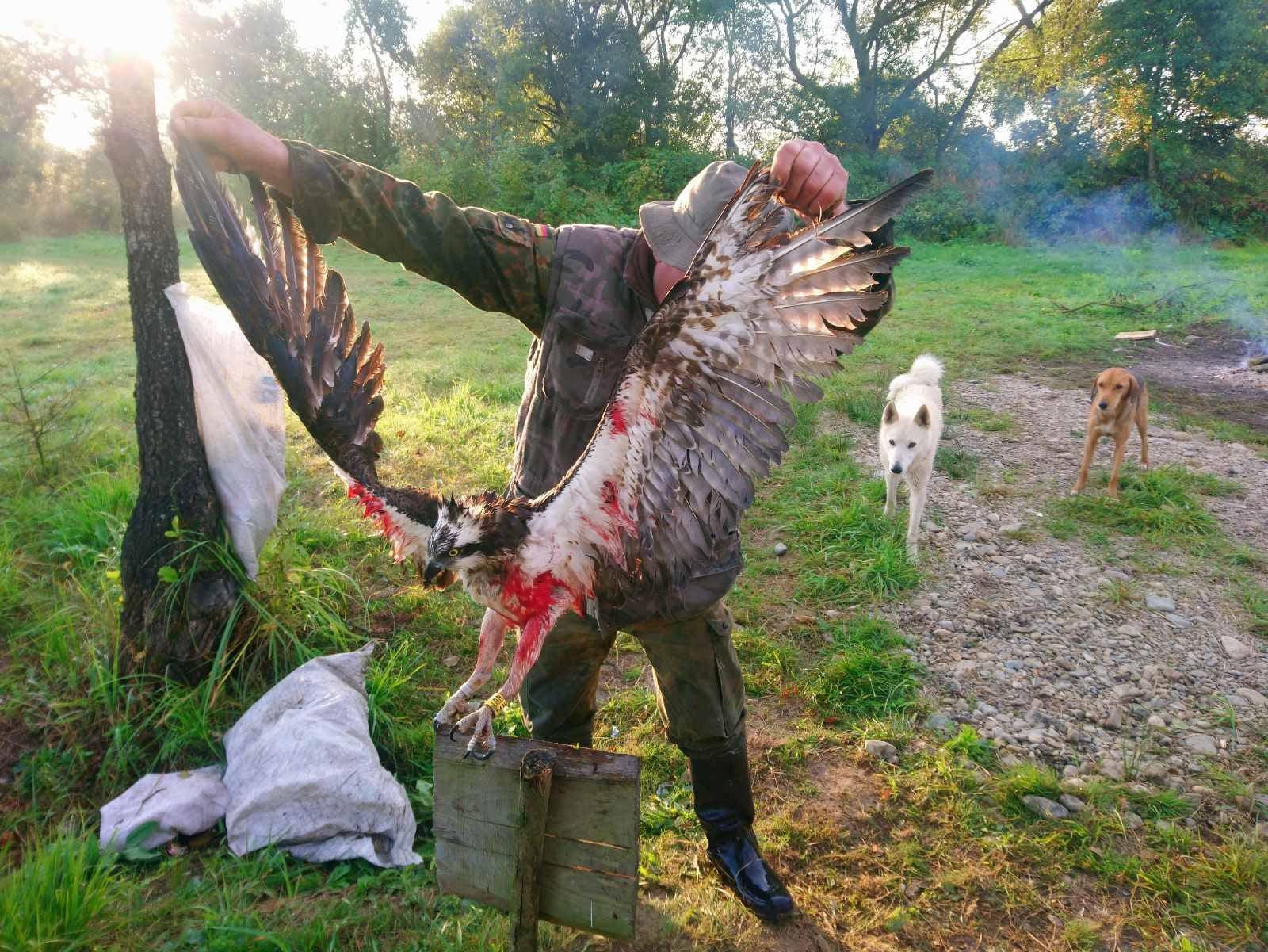 На Прикарпатті браконьєри вбили рідкісного птаха (ФОТО)
