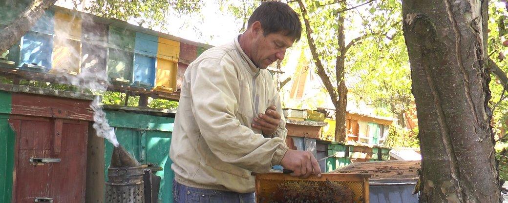 Карпатський мед: як вже понад 25 років прикарпатець займається бджолярством у горах (ФОТО, ВІДЕО)