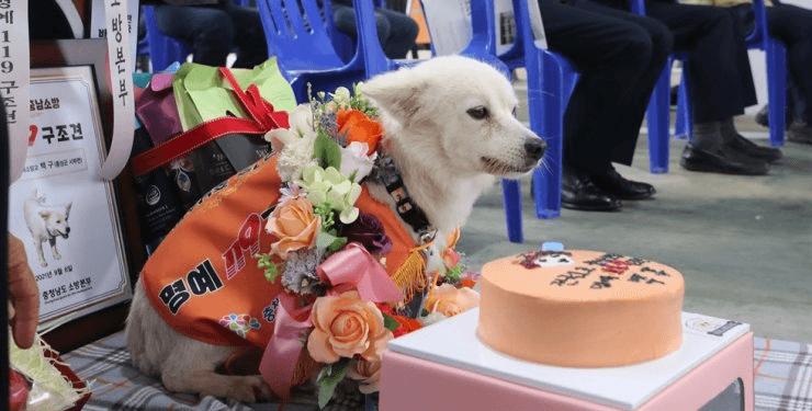 У Південній Кореї пес вперше отримав нагороду як рятувальник. Він запобіг переохолодженню власниці, коли та заблукала (ФОТО)