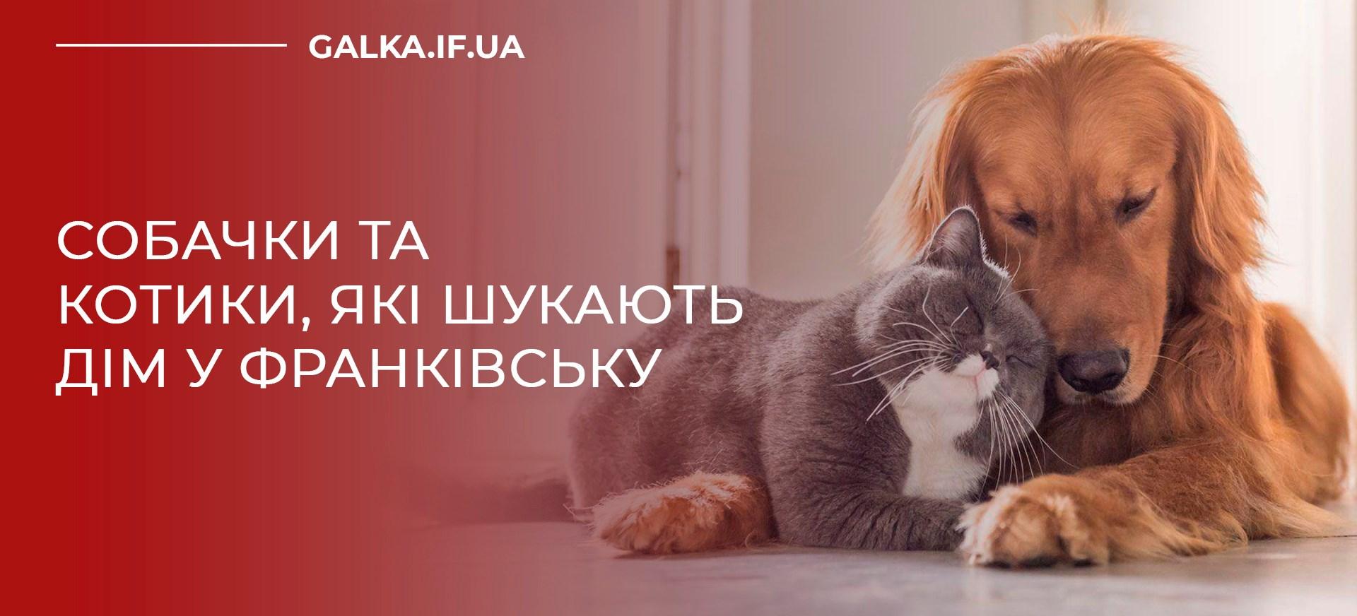 Пухнасті і самотні: собачки та котики, які шукають дім у Франківську (ФОТО)