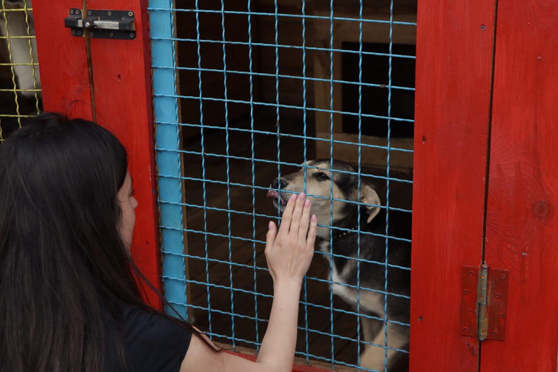 Притулкам для тварин Франківщини благодійники допомогли побутовою технікою (ФОТО)