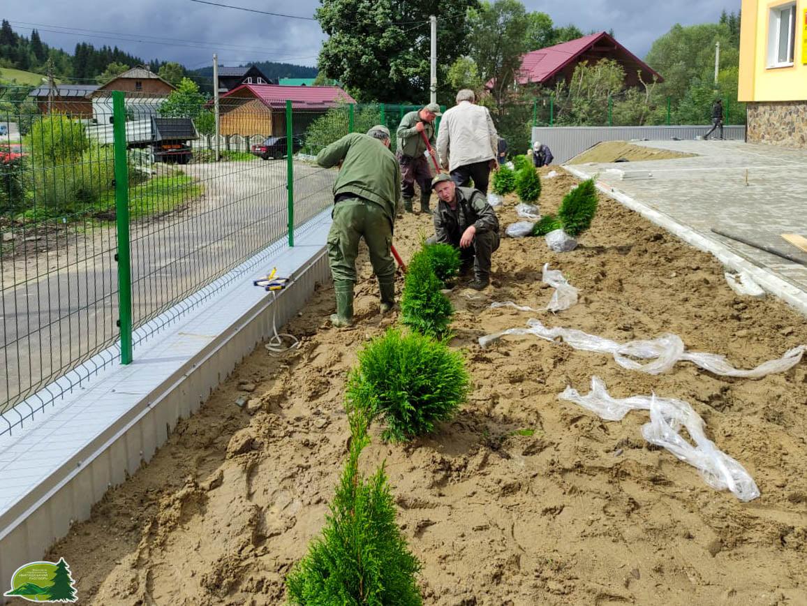 Лісівники озеленили подвір'я оновленої школи у Вишківській громаді (ФОТО)